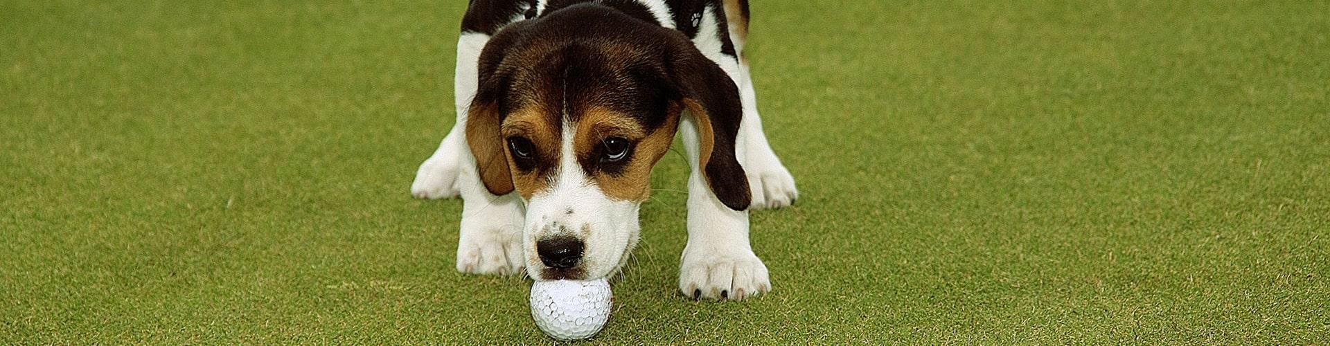 Clubordnung Golfclub Ravensberger Land e.V.